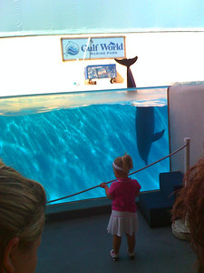 Sydney and the dolphins at Gulf World  - camera phone
