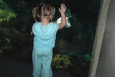 SHARK!  Sydney enjoying the Chattanooga Aquarium