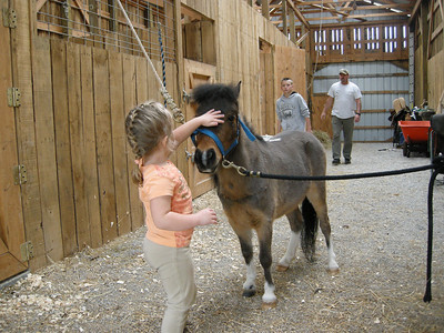Boots the Miniature Horse