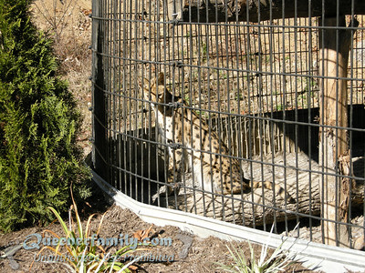 Little Ponderosa Zoo
