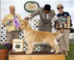 Carrie going winners at the Yankee Specialty shown by Mark Derosier