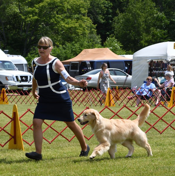 Picture moving in the ring with handler Diana Mason at the North Shore Kennel Club Show June 2018