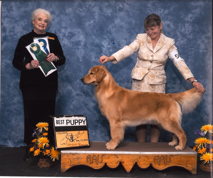 Jelly - Best Puppy and the 2015 Long Island Specialty - Feb. 2015