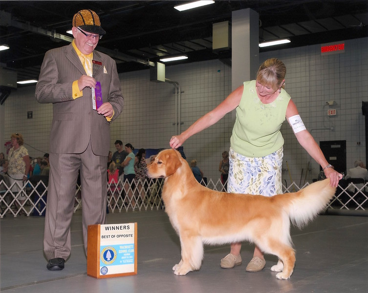Jelly winning two more points to her AKC Championship
