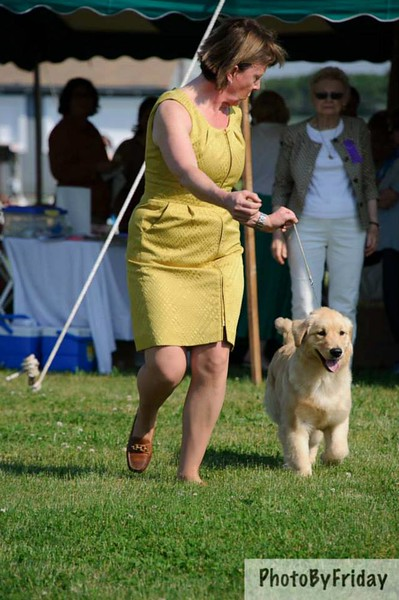 Midge in 6-9 Sweepstakes at the 2013 Yankee Specialty.  Judge Janet Bunce in the background