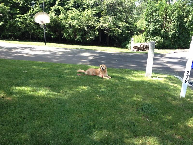 Tyra enjoying a beautiful sunny day
