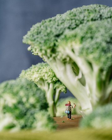 Broccoli Forest 2