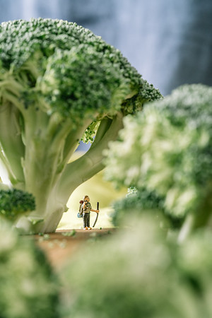 Broccoli Forest 1