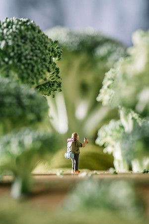 Broccoli Forest 3