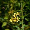 Flowers & Scenery 0159