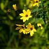 Flowers & Scenery 0161