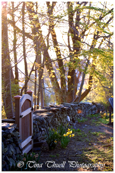 One entire side of the boundary was this amazing Rhode Island Stone Wall.....it had a gap and I used the left over wood from the deck to make this beautiful gate.