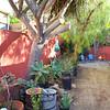 Back yard--before