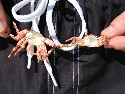 Pete's got crabs!