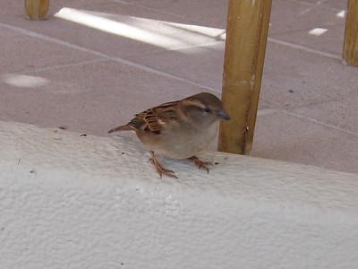 little birdies like tortilla chips