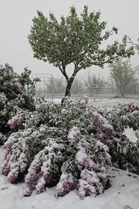 Snow 009 #10