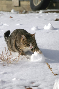 Doesn't your cat make snowballs?