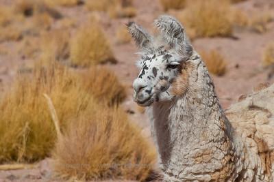 © Enrique Couve, FS Expeditions | www.fsexpeditions.com