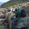 Tour leader Enrique Couve while photographing albatrosses at their nests in West Point Island, Falkland Islands / Islas Malvinas