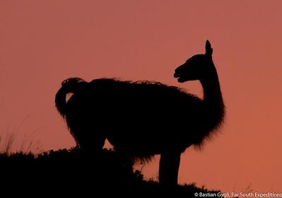 Guanaco silhouette, Torres del Paine, Chile © Bastian Gygli, Far South Exp