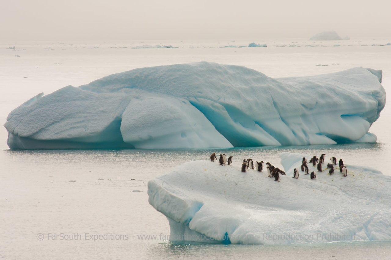 "© Claudio F. Vidal, FS Expeditions -  <a href=""http://www.fsexpeditions.com"">http://www.fsexpeditions.com</a>"