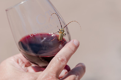 Wines and insects.