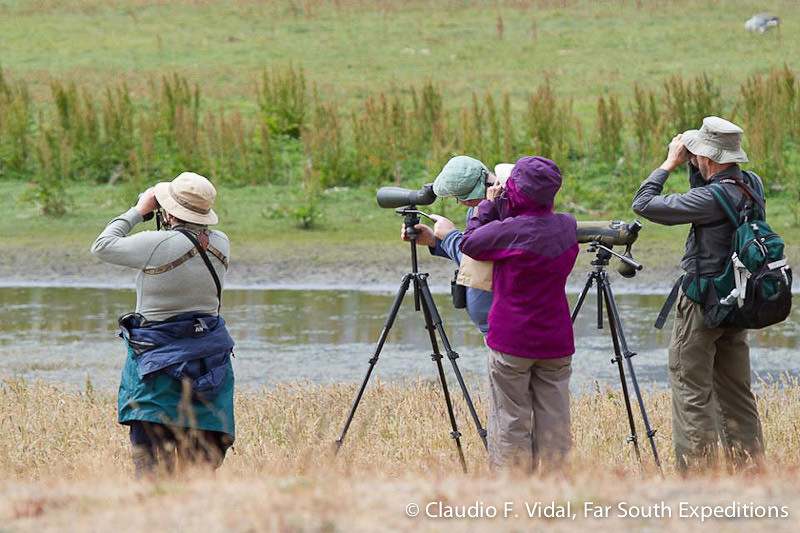 Birding Chile; Birding in Torres del Paine National Park, Patagonia