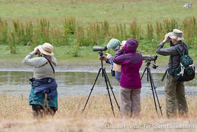 Birding Chile; Birding in Torres del Paine National Park, Patagonia