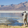 Photographing Puna and Andean Flamingos at Surire salt flat, Arica, northern Chile
