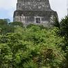 The impressive buildings of the Tikal citadel, Tikal NP, Petén, Guatemala