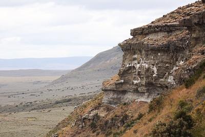 PUQ003 Condors of Patagonia