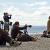 Guests Roy, Peter, Coreena, Krystina and Karel are busy photographing King Penguins at Useless Bay, Tierra del Fuego, Chile