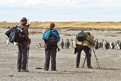 Photographing King penguins, Tierra del Fuego, Magallanes, Chile
