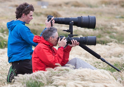 Photographing King Penguins at Tierra del Fuego, Chile