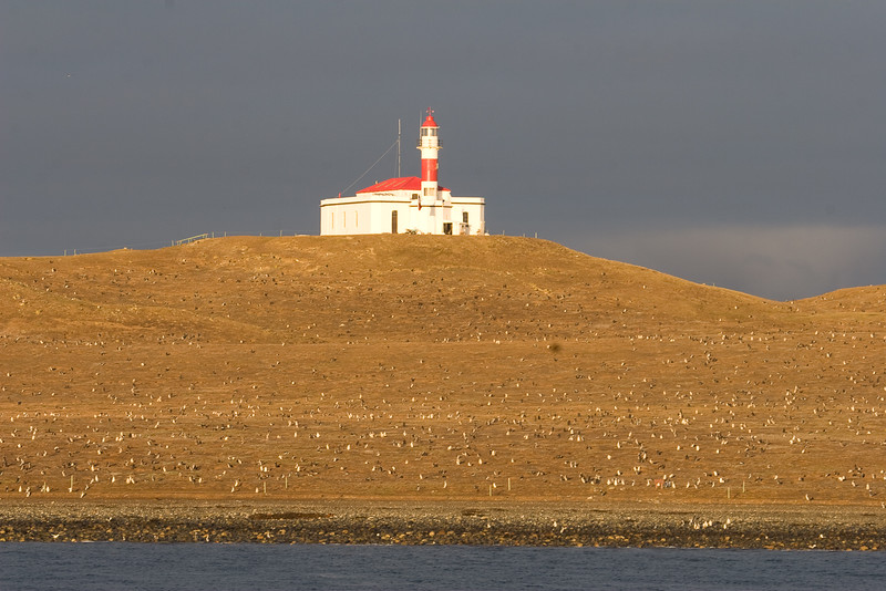 Magdalena Island, Patagonia, Chile