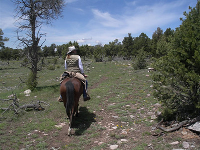 05.07.07: Horseback Riding in Ridgway