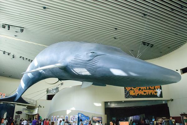 Long Beach Aquarium October 2014