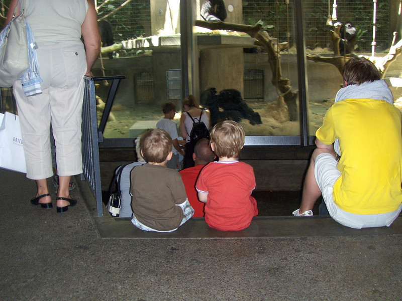 "Jack's favourite thing at the zoo at the moment is the ""big monkies"" (gorillas). Here's he & Fin taking a look."
