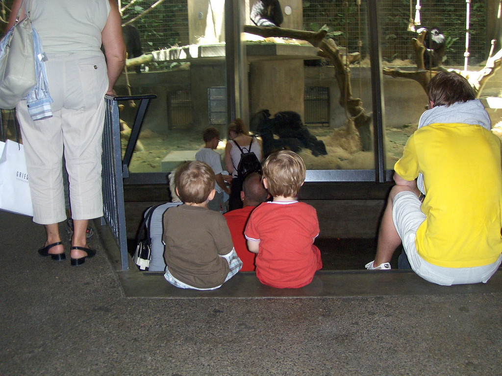 """Jack's favourite thing at the zoo at the moment is the """"big monkies"""" (gorillas). Here's he & Fin taking a look."""