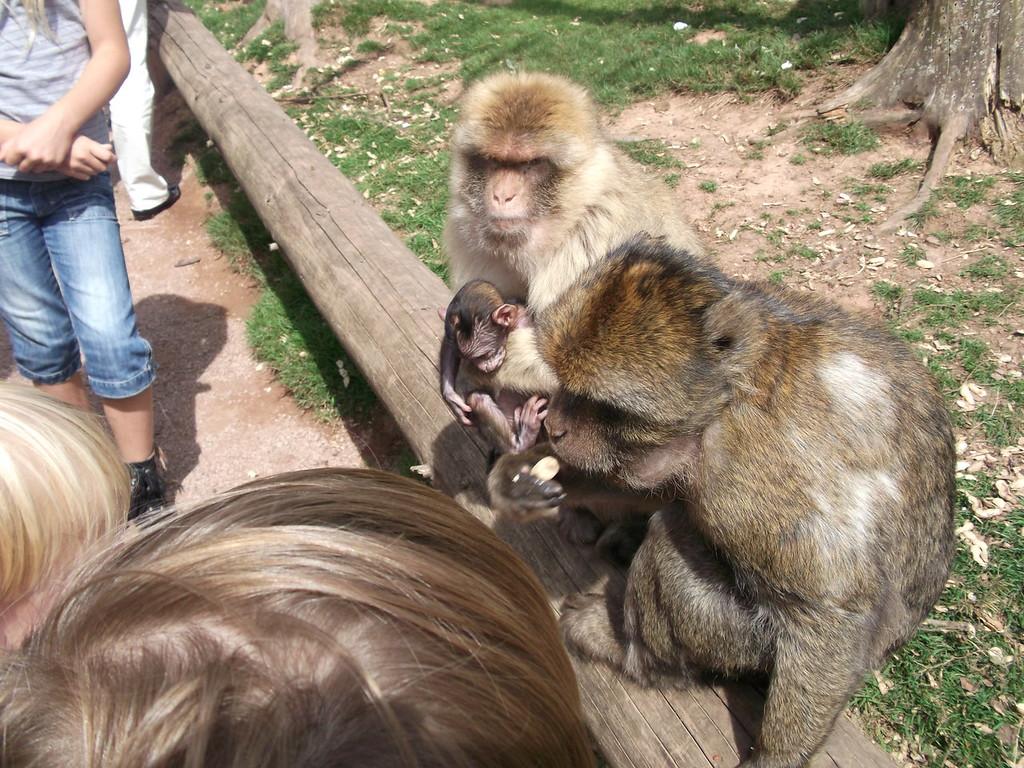 059 Monkey family