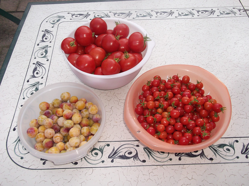 Our vegetable patch did not work well this year, but our tomato plants went CRAZY and we got a tonne of mirabelles too ...