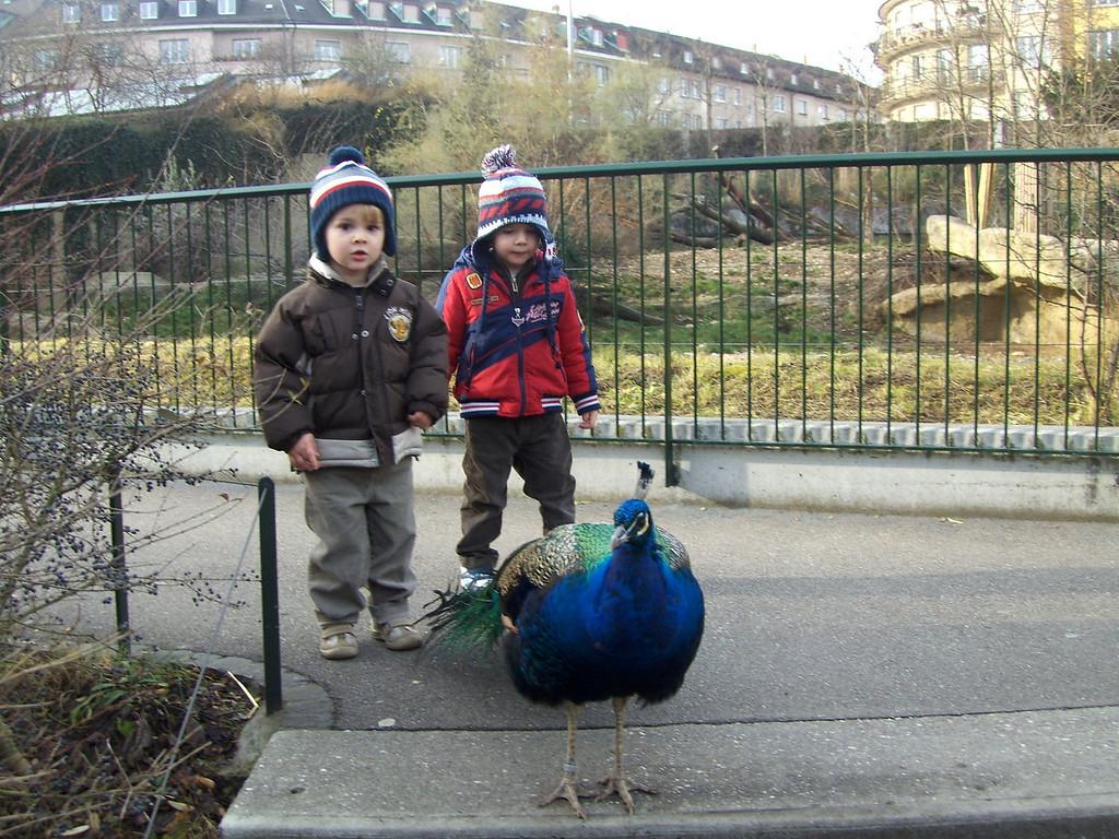 043 Findlay Jack & a Peacock