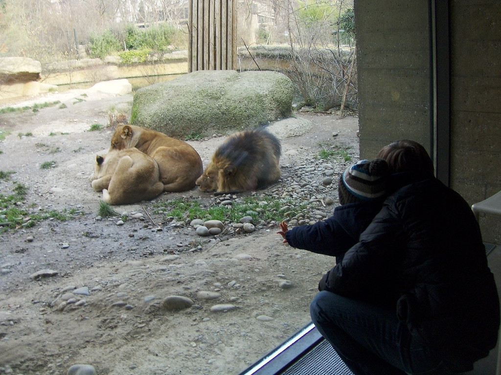 044 Jakie Watching the Lions