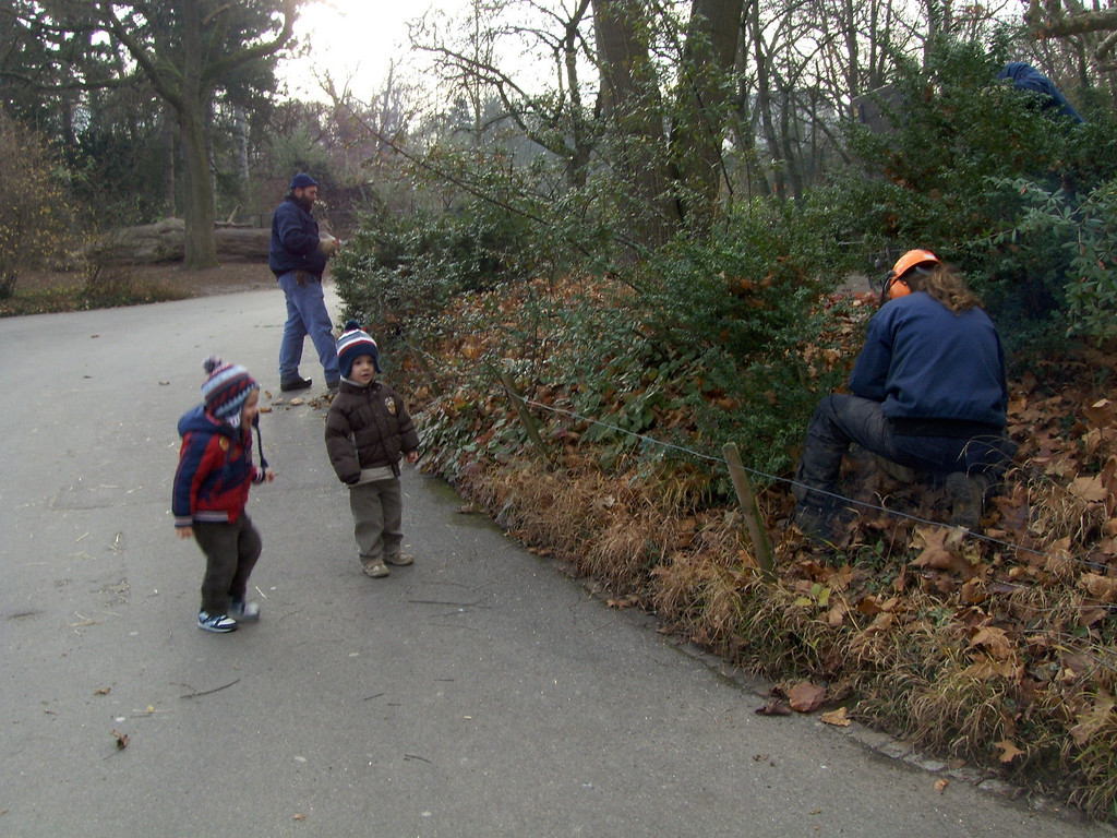 Fascinated by the man making noise (pruning the trees)