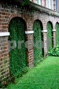 Old ivy covered windows at a Charleston church