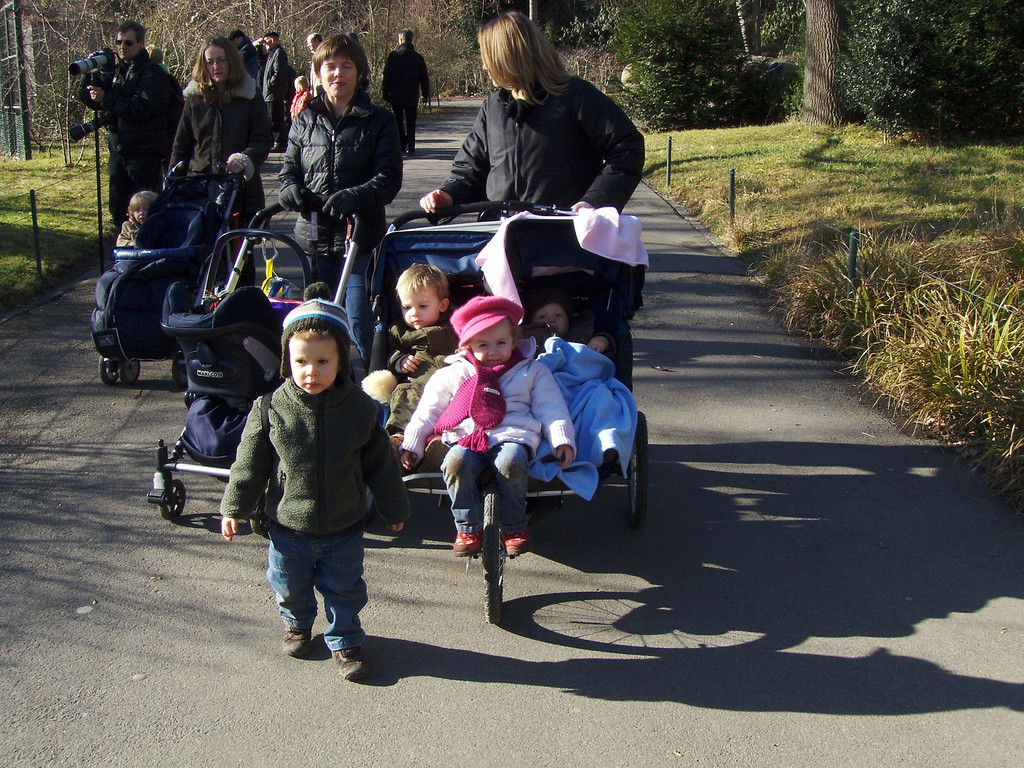 The whole gang. Sam walking with Amanda, Charlotte pushing Jake, Emma with Jack, Gabriel & Sophia all in the pushchair & Findlay leading the pack
