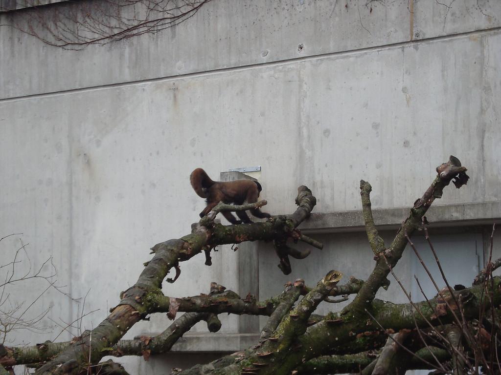 042 Monkey