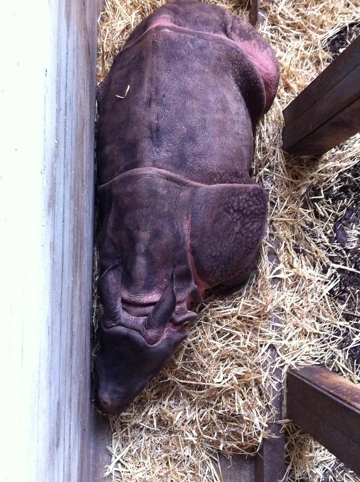 021 Baby Hippo