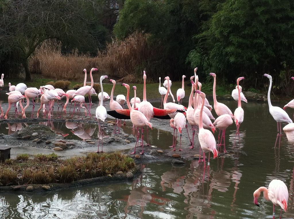 020 Flamingos