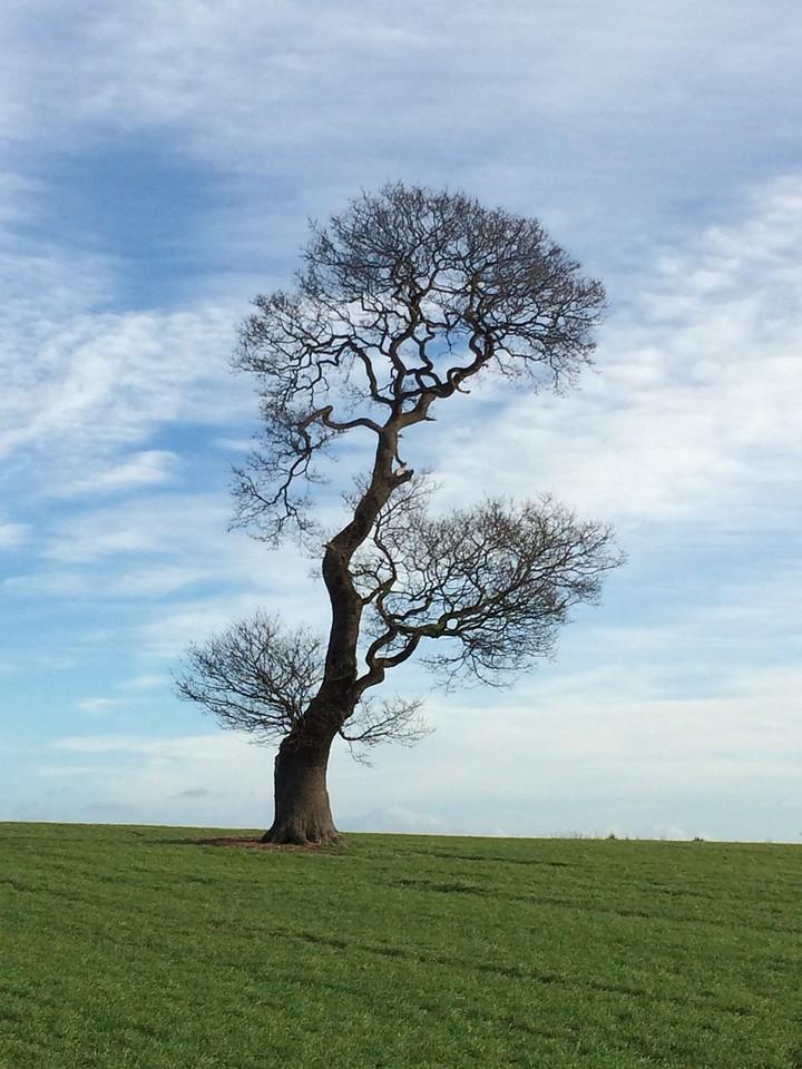 036 Stunning Tree